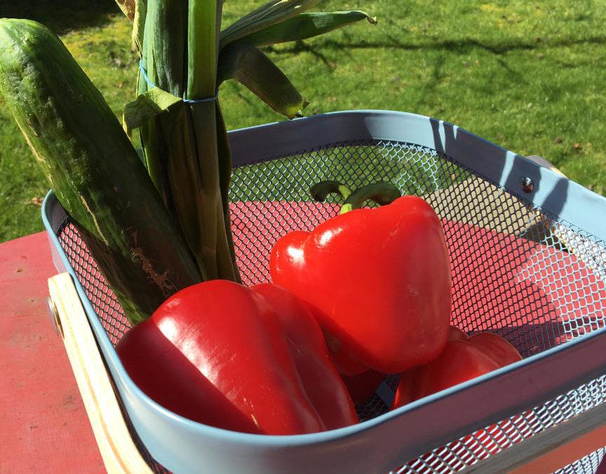 Immunsystem durch Gemüse stärken